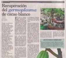 Recuperación del germoplasma de cacao blanco